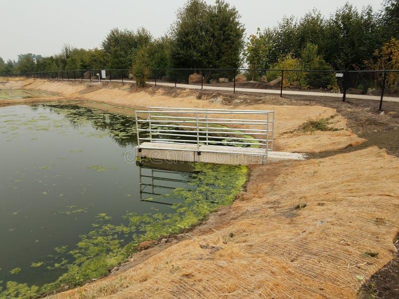 See oder Teich mit Grünalgen und brauner Landschaftsgestaltungsgewebe- und Zementplattform lizenzfreies stockfoto