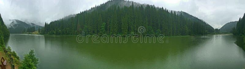 See Rosu mit Klumpen-, Nebel- und Kiefernwald, Transsylvania, Rumänien lizenzfreie stockfotografie