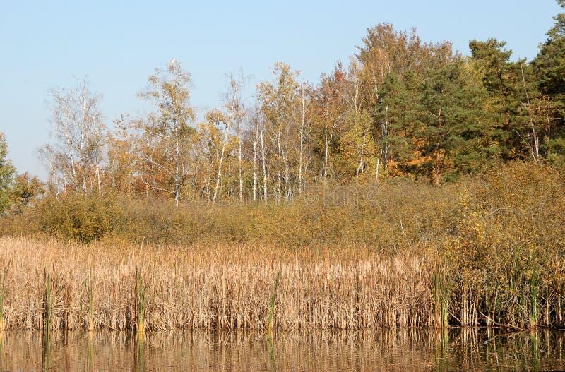 See, Schilf und Bäume im Herbst stockbild