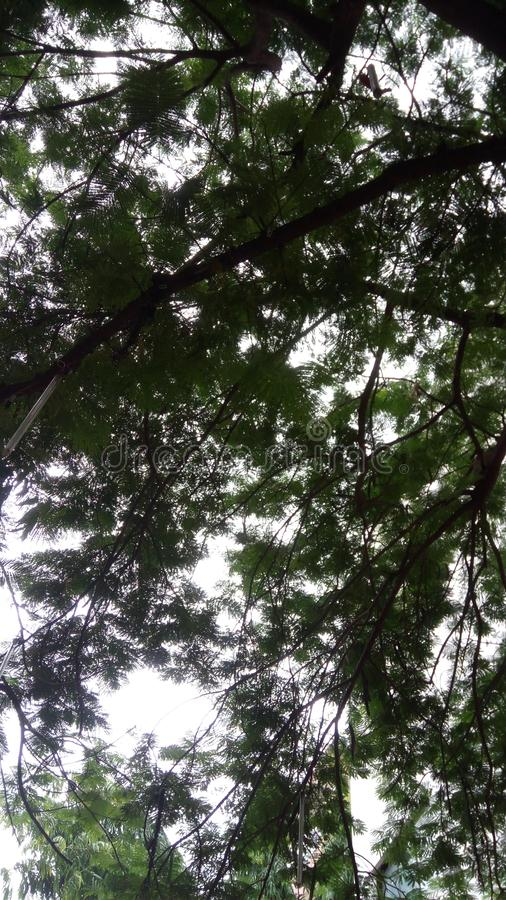 See the sky hidden in the tree royalty free stock image