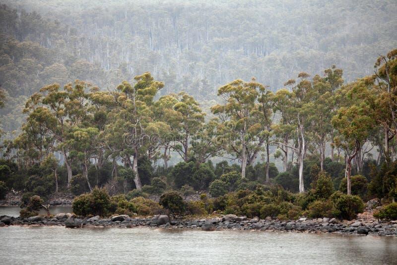 See-St Clair Tasmania stockbilder