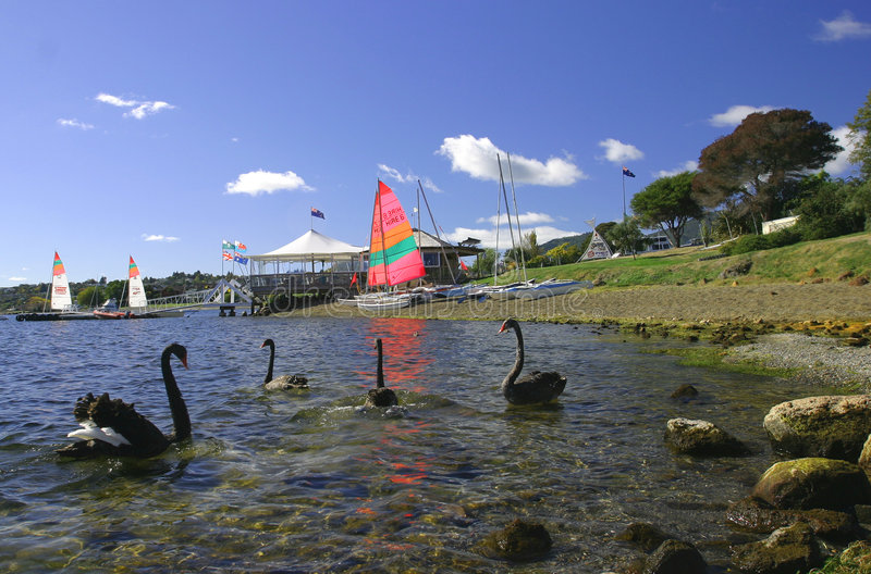 Download See Taupo, Neuseeland stockfoto. Bild von schwan, sport - 49622