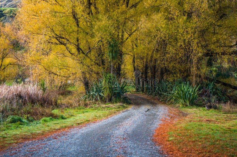 See Tutira-Weg im Herbst Hawkes Bucht Irgendwo in Neuseeland lizenzfreies stockfoto