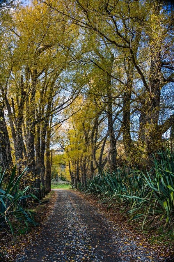 See Tutira-Weg im Herbst Hawkes Bucht Irgendwo in Neuseeland stockfotos
