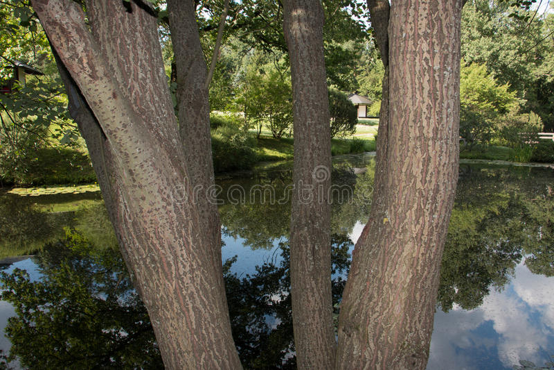 See u. Baum lizenzfreie stockfotos
