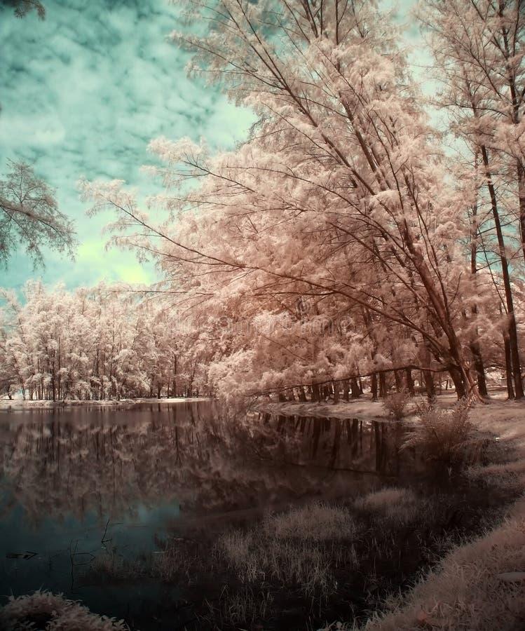 See und Bäume in der Infrarotansicht lizenzfreies stockfoto
