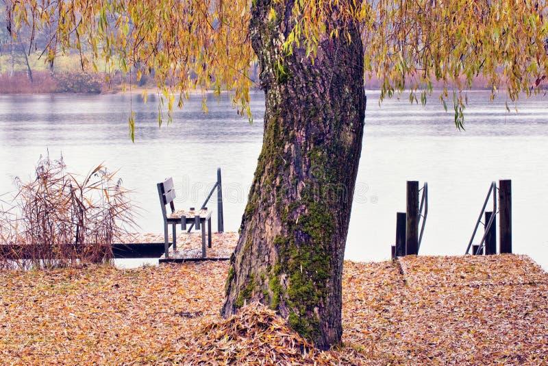 See und Baum lizenzfreie stockbilder