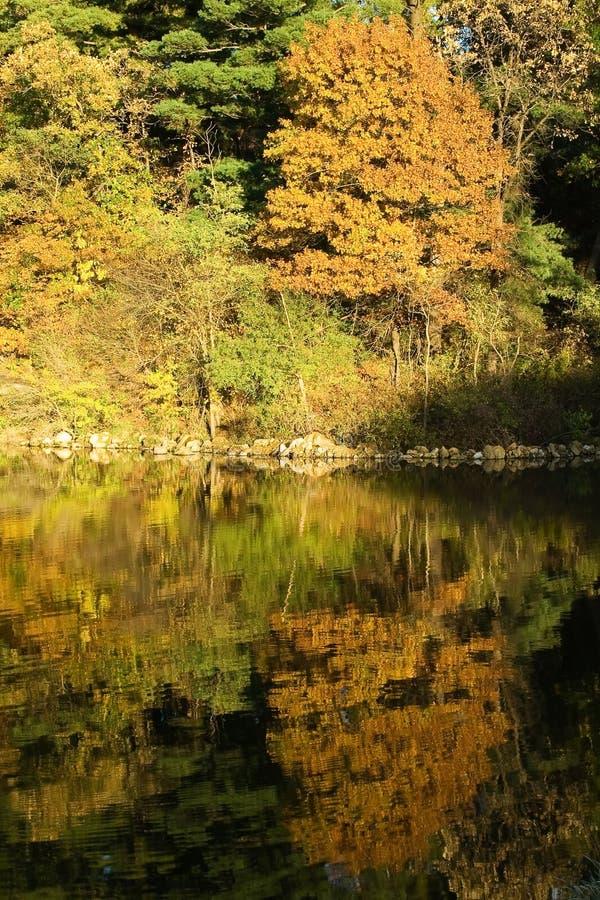 See und Herbstwald stockbilder