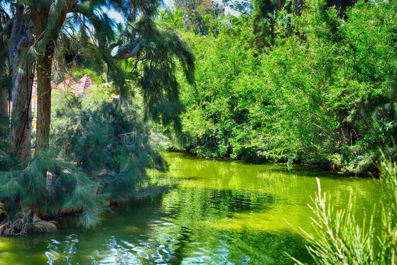 See und Wald lizenzfreie stockbilder