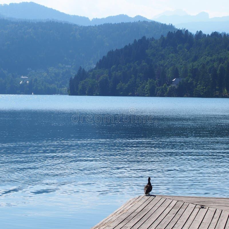 See verlaufen in Slowenien lizenzfreie stockfotografie