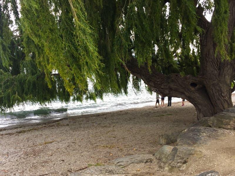 See Wanaka in Neuseeland stockbild
