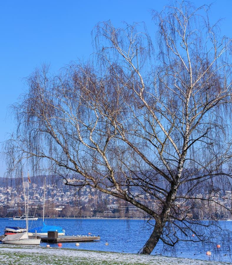 See Zürich im Winter lizenzfreie stockfotos