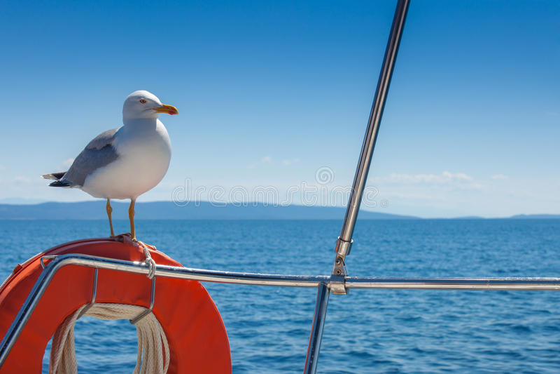 Seeagull. Seagull standing on the orange lifebelt against the blue sky stock photos