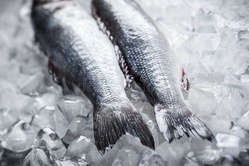 Seebarsch auf Eis lizenzfreies stockbild