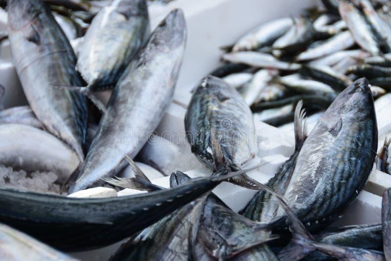 Seebarsch der frischen Fische auf schwarzem Hintergrund lizenzfreie stockbilder
