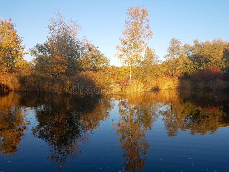 Seeblick in Merian Garden lizenzfreie stockfotografie
