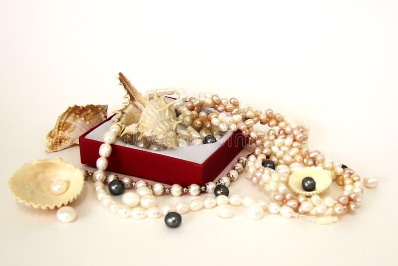 Seecockleshells und -perlen auf einem schwarzen Hintergrund stockbilder