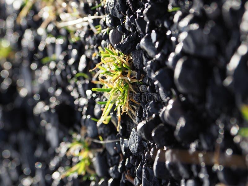 seed stockbilder