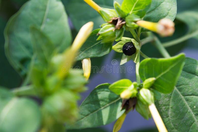 seed stockfotografie