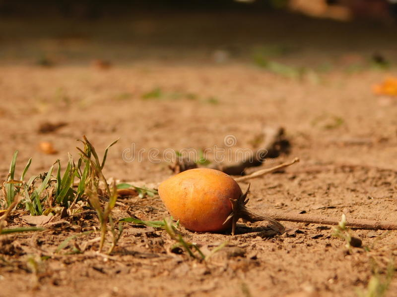 seed arkivfoto