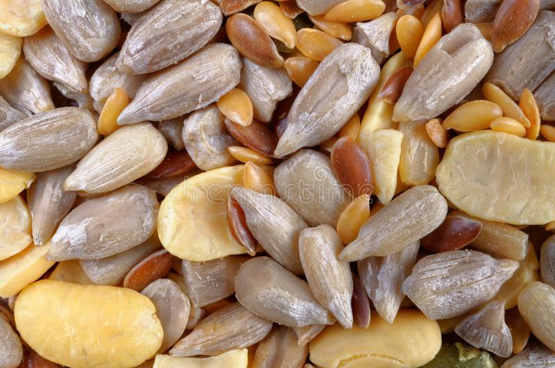 Seed and Bean Mixture royalty free stock photography