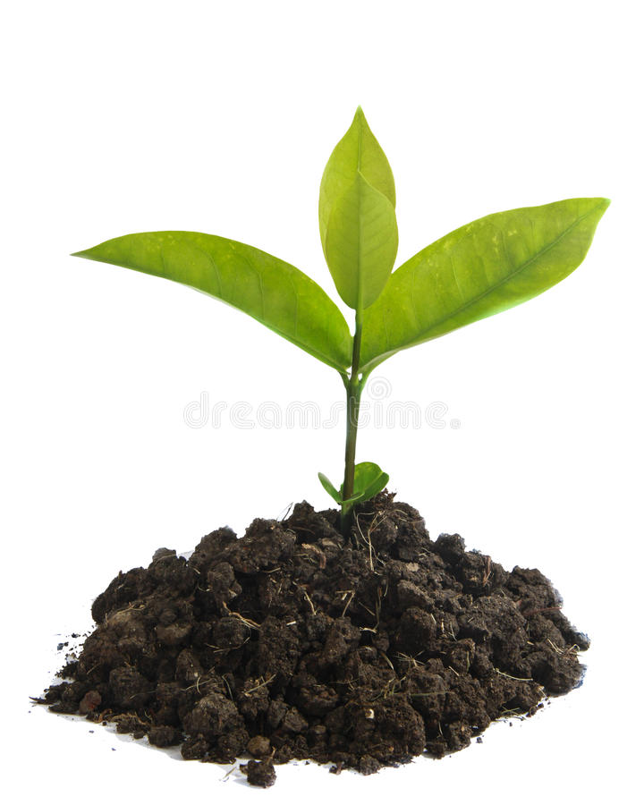 Seed. Happy to see my baby grow up royalty free stock photo