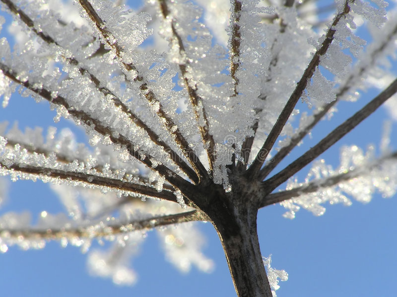 Seed with ice crystals. Close-up of seed with ice crystals against blue winter sky royalty free stock image
