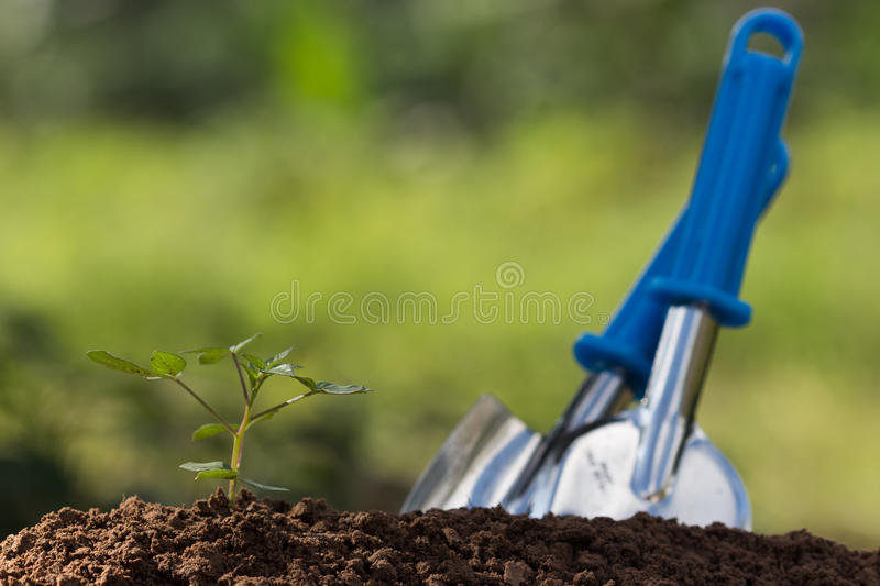 Seed roots of young plant stock image