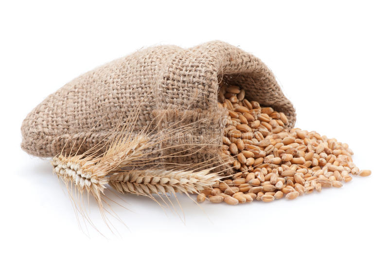 Seed in small burlap sack. Grains in small burlap sack on white background stock image