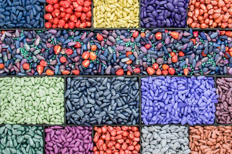 Seed sunflower seeds, corn, radishes. painted agro color for sorting and labeling.  stock photo
