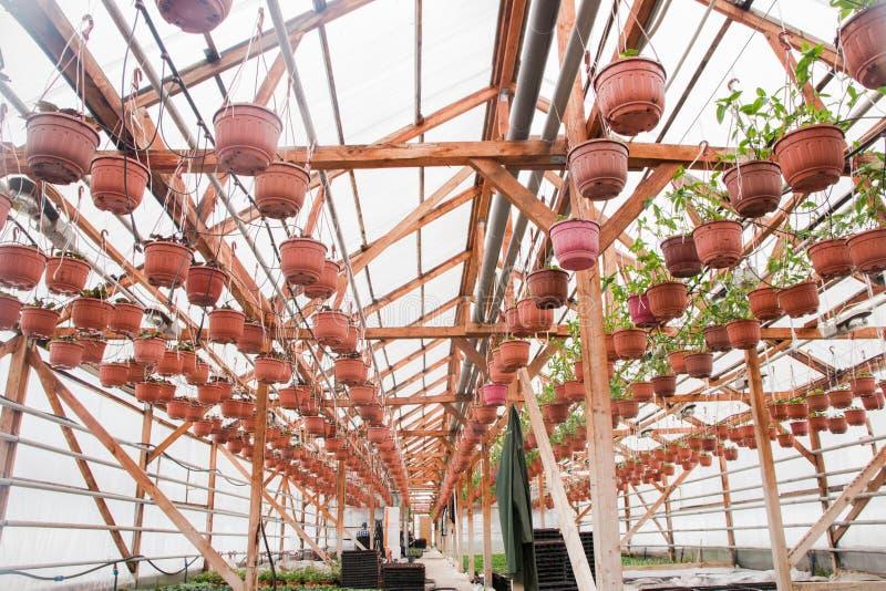 Seeding in greenhouse. seeding plants greenhouse. seeding in greenhouse concept. plant seedling in greenhouse. new life.  stock photo