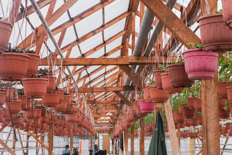 Seeding in greenhouse. seeding plants greenhouse. seeding in greenhouse concept. plant seedling in greenhouse. new life.  stock photography