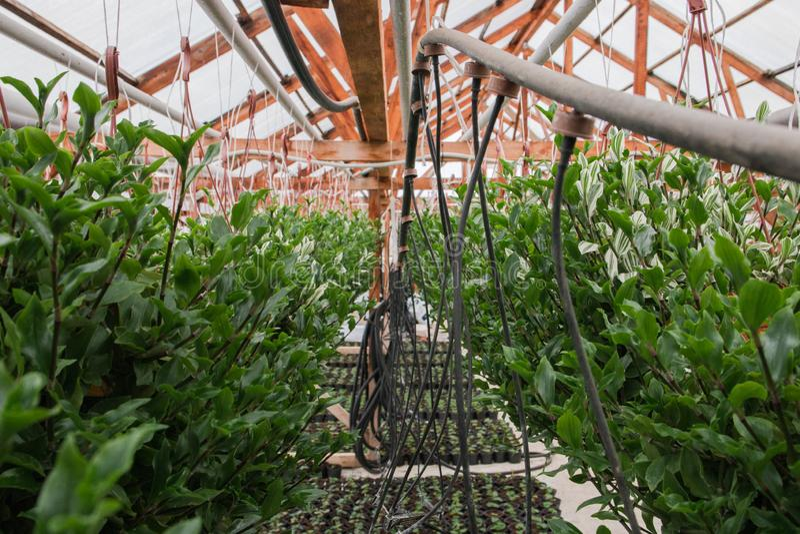 Seeding in greenhouse. seeding plants greenhouse. seeding in greenhouse concept. plant seedling in greenhouse. new life.  royalty free stock photos
