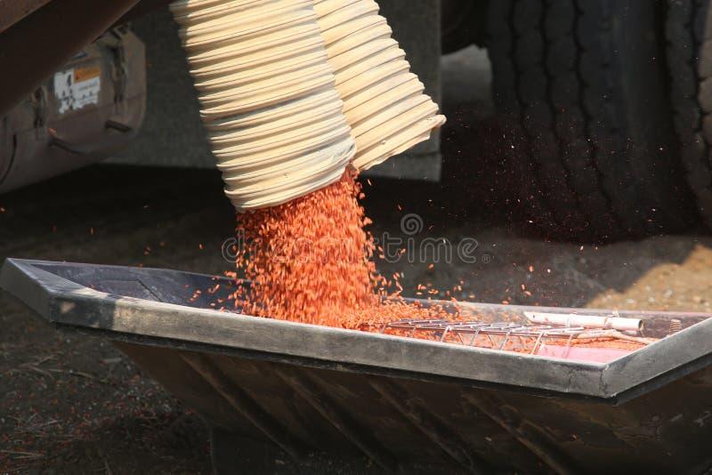Seeding in Saskatchewan royalty free stock image