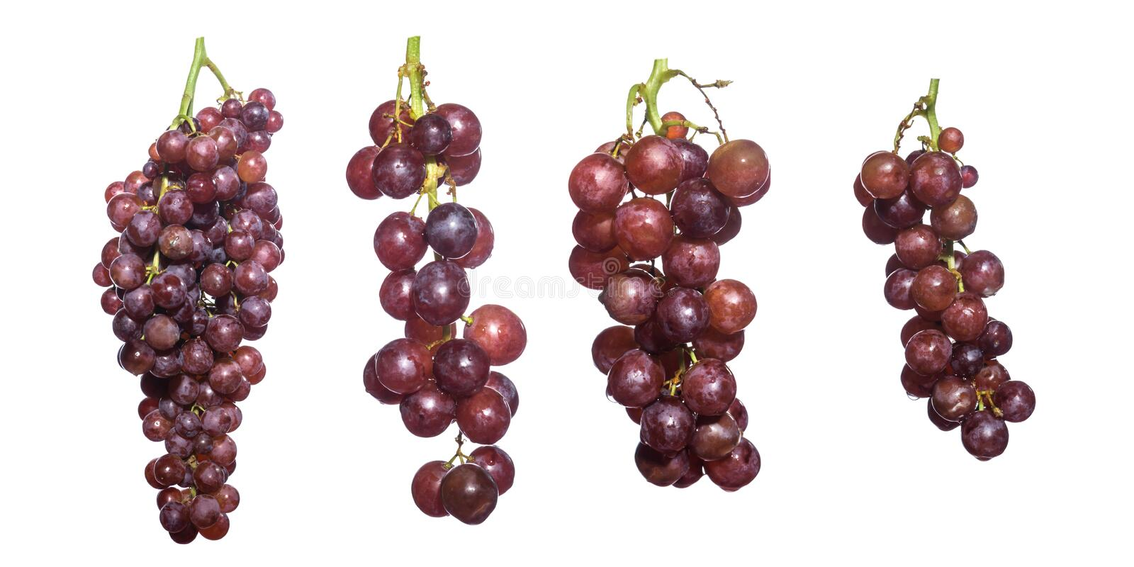 Seedless grape isolated,collection. royalty free stock photo