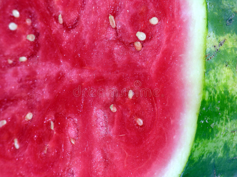 Download Seedless Watermelon stock image. Image of melon, chunk - 164247