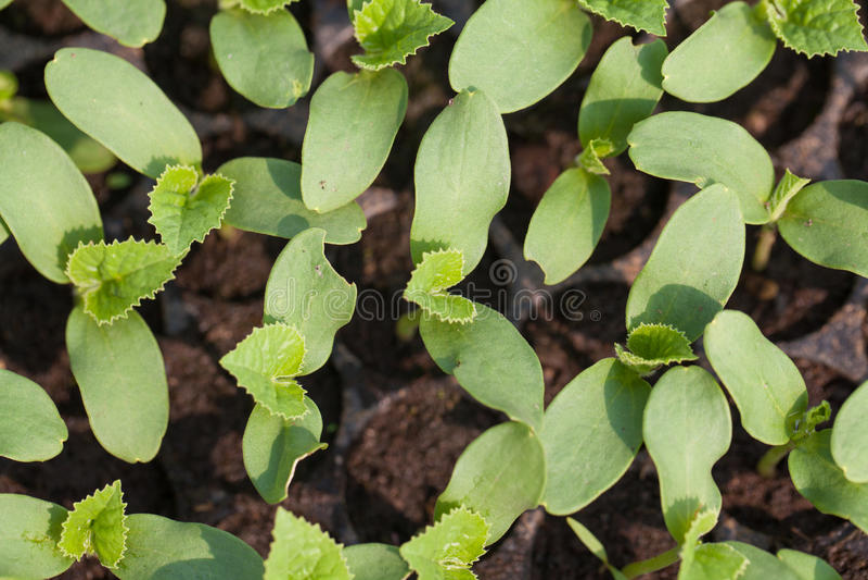 Download Seedling stock image. Image of greenery, botany, greenhouse - 38238649