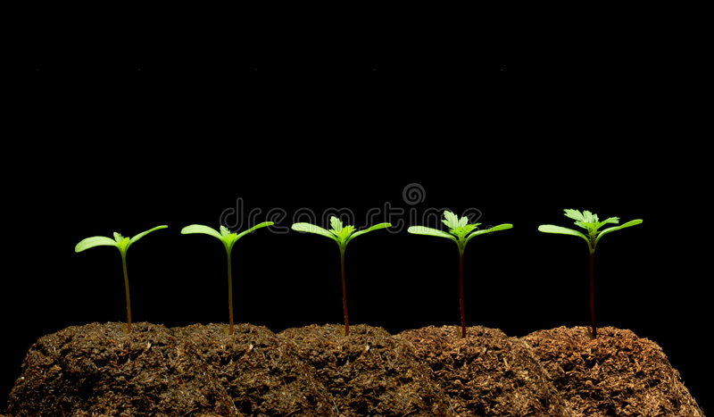 Download Seedling stock image. Image of healthy, botany, growing - 4717235