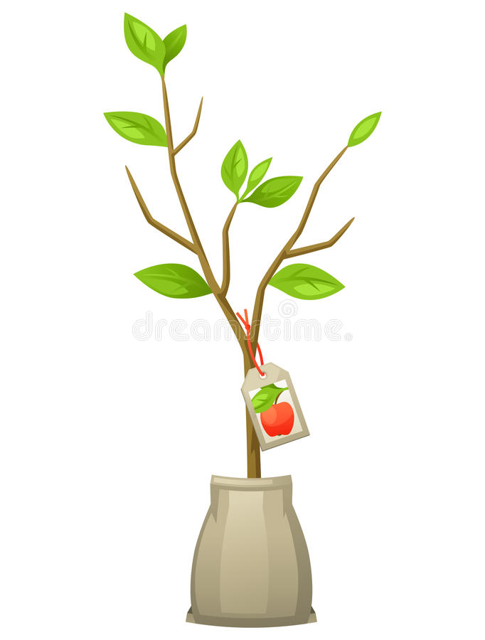 Seedling of apple tree with tag. Illustration for agricultural booklets, flyers garden.  vector illustration