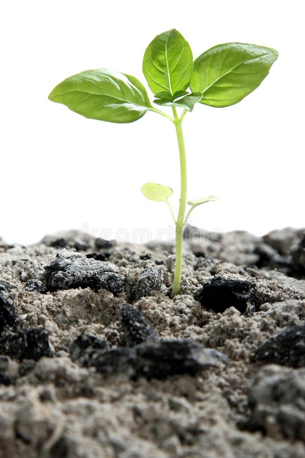 Download Seedling in Ashes stock photo. Image of environment, natural - 17956906