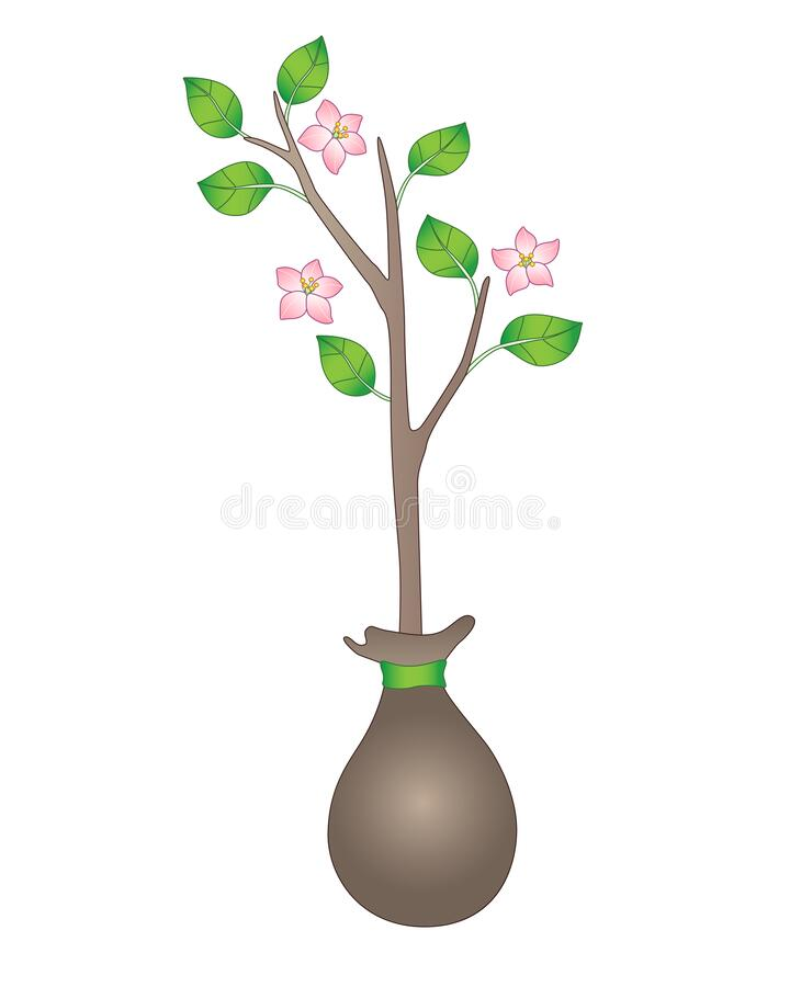 Seedling. Blooming sapling with young leaves. A small tree ready for planting. Gardening and buying plants in spring. Small bloomi royalty free illustration