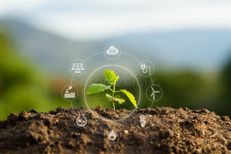Seedling with bubble of eco icon with green nature background royalty free stock photo