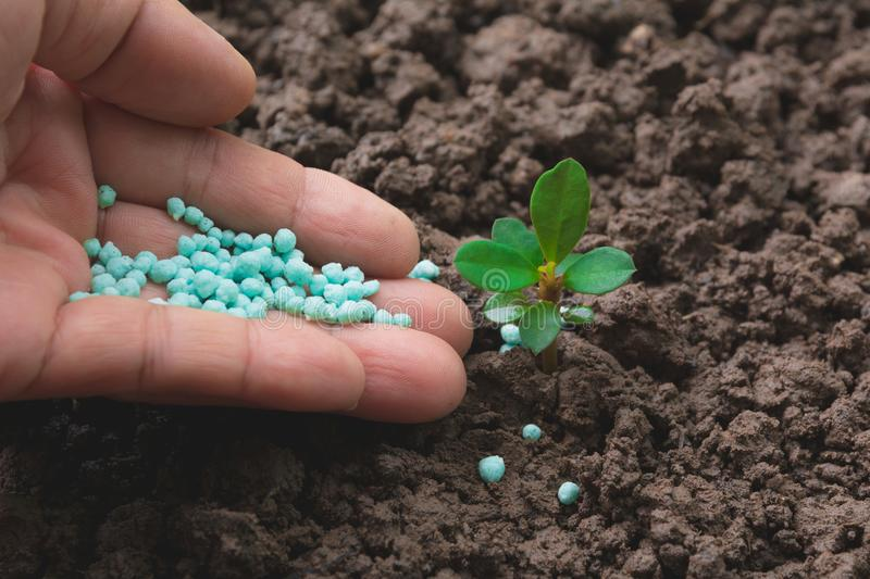 Seedling concept by human hand apply fertilizer stock photos