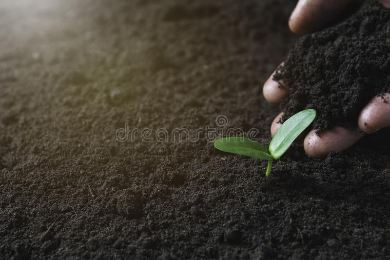 Seedling concept by human hand with young tree on nature background royalty free stock image