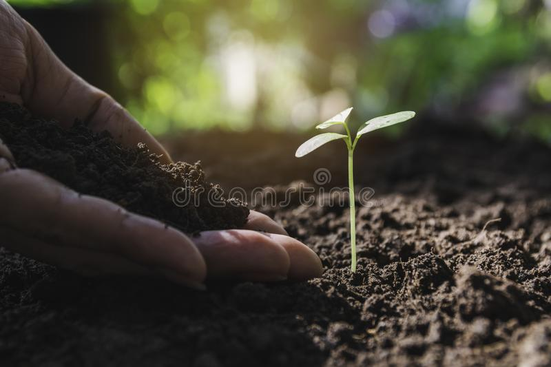 Seedling concept by human hand with young tree on nature background royalty free stock photography