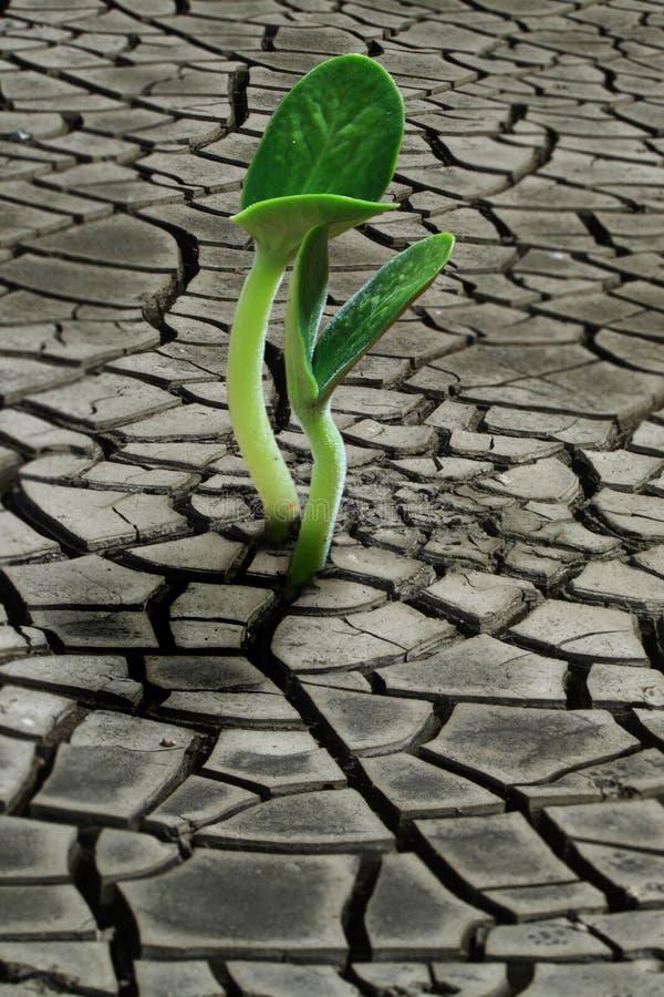 Seedling do solo seco imagens de stock royalty free