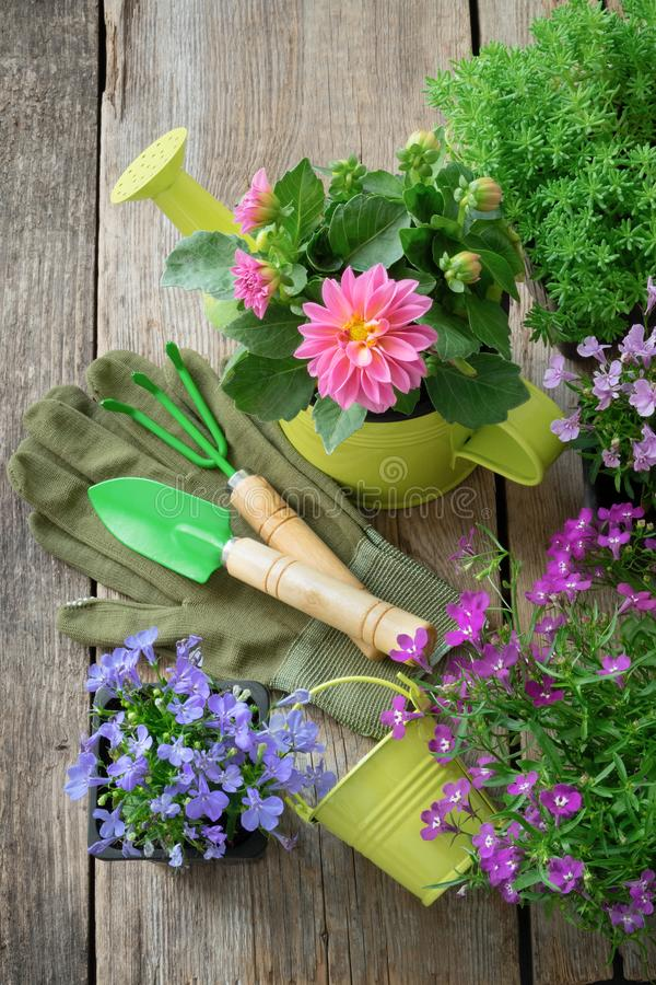 Seedling of garden plants and flowers for planting. Garden equipment: watering can, shovel, rake. royalty free stock image