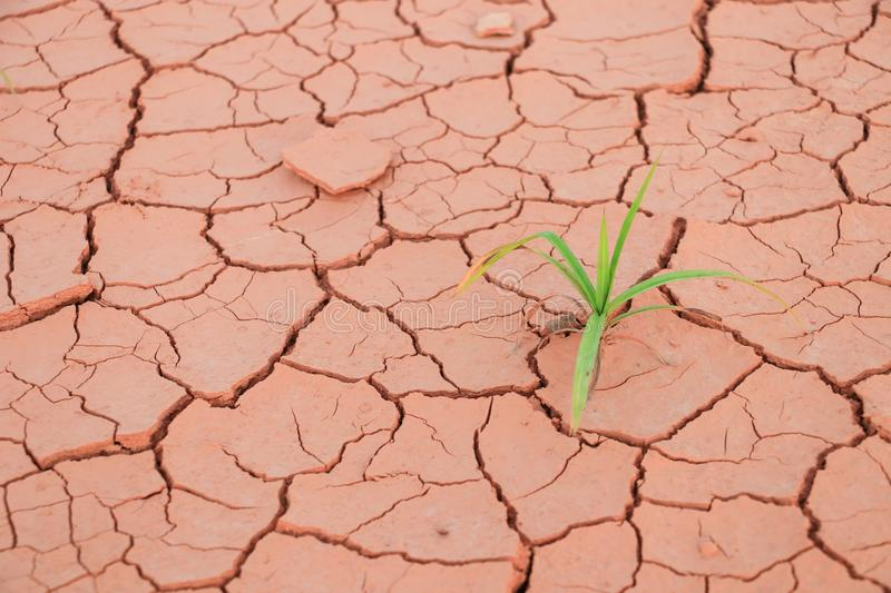 Seedling grass growing trough dry soil crack royalty free stock photography