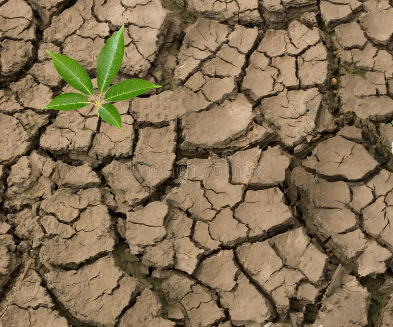 Download Seedling Growing From Barren Land Stock Image - Image: 16572911
