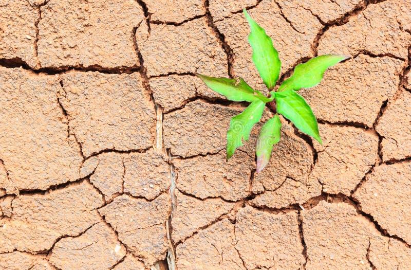 Seedling growing trough dry soil cracks royalty free stock photos